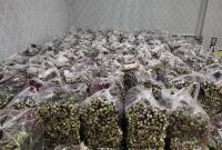 潜江一农场主向武汉捐赠1万2千斤菜薹