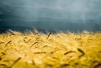 今日秋分 | 桂蕊伴秋色 稻香话丰收